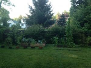Garden Image Full